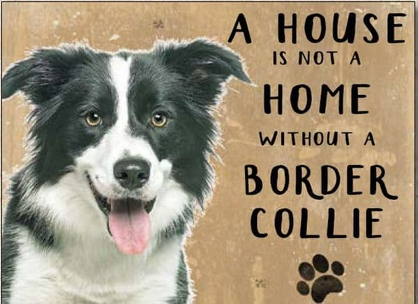 A House is Not a Home Without a Border Collie.  Small Metal Sign 200mm x 150mm (og)