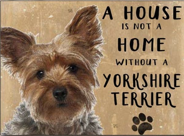 A House is Not a Home Without a Yorkshire Terrier.  Small Metal Sign 200mm x 150mm (og)