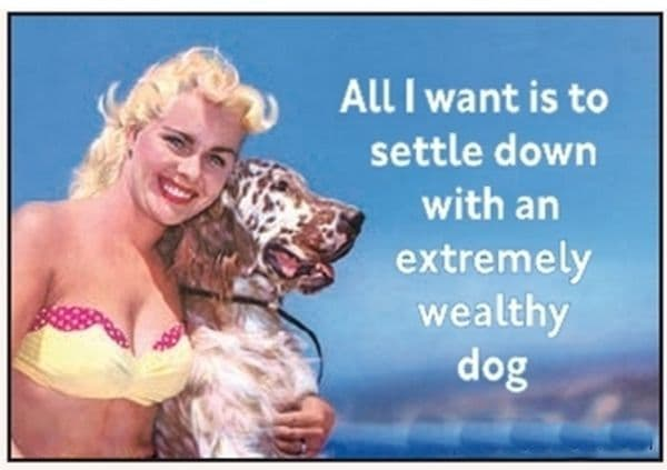 All I Want Is To Settle Down With A Wealthy Dog funny fridge magnet   (ep)
