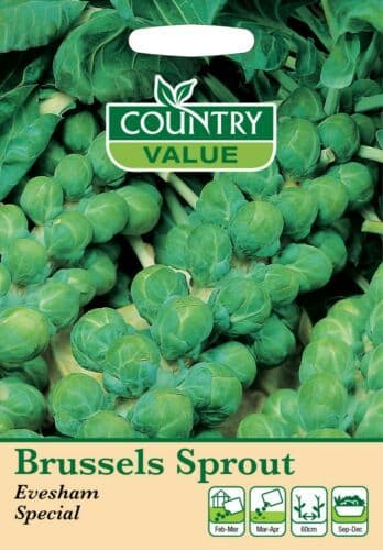 Brussels Sprout Evesham Special Seeds (300)