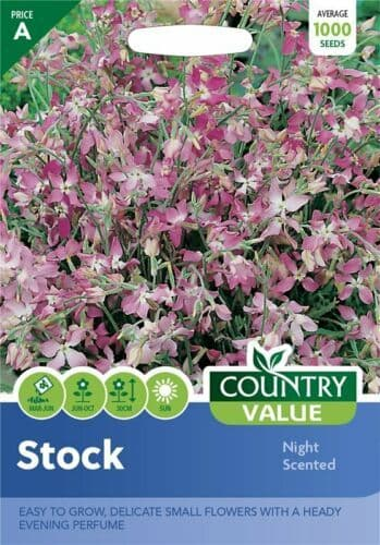 Stock Night Scented Seeds (1000)