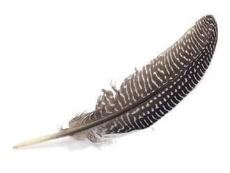Smudging Feather, Guinea Feather (Single)