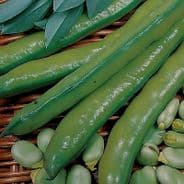 Broad Beans seeds - Bulk - 4 Varieties - 1kg - 5kg - Vegetable
