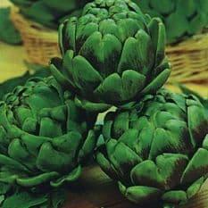 Artichoke Green Laon ( Globe ) Italian - 5 grams - 500 grams