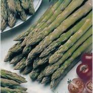 Asparagus Connover's Colossal - 25 Grams - Bulk Discounts Available