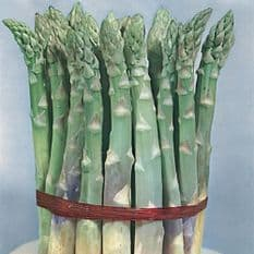 Asparagus Mary Washington - Appx 85 seeds