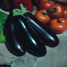 Aubergine Long Purple - 25 grams - Bulk discounts available