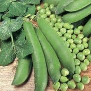 Autumn vegetable seed collection 4 varieties
