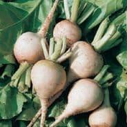 Beetroot Albina Ice 100 Seeds