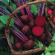 Beetroot Boltardy Seeds Appx 100 seeds