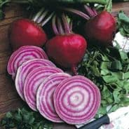 Beetroot Chioggia - Appx 600 seeds