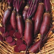 Beetroot Cylindra Seeds - Appx 150 seeds
