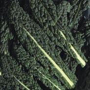 Borecole Black Tuscany - Kale - appx 1,200 seeds