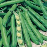 Broad Bean Bunyards Exhibition 60 seeds