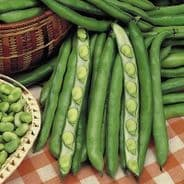Broad Bean Giant Exhibition 30 seeds