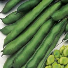 Broad Bean Imperial Green Longpod - 35 seeds