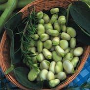 Broad Bean Witkiem Manita - 60 seeds