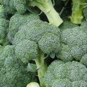 Broccoli / Calabrese