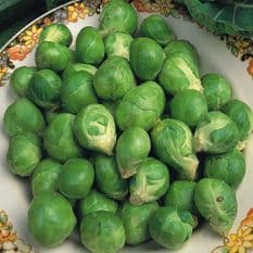 Brussels Sprout Evesham Special - Appx 300 Seeds