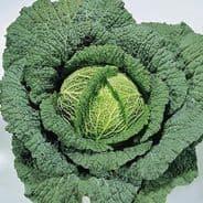 Cabbage Ormskirk (Savoy) - 300 seeds