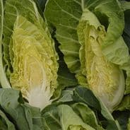 Cabbage Wintergreen - Appx 1000 seeds