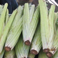 Cardoon Bianco Avorio Appx 100 seeds