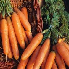 Carrot Amsterdam 2 - Adam 50 grams - Bulk Discounts available