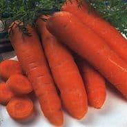 Carrot Autumn King 2 pelleted Seeds - 150 Pellets
