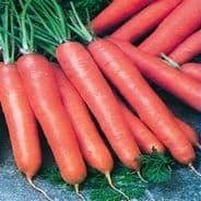 Carrot berlicum - 5000 seeds