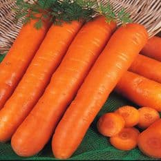 Carrot Early Nantes 2 - Appx 1600 Seeds