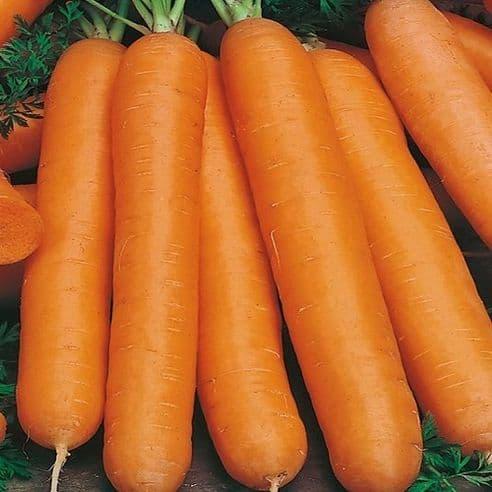 Carrot F1 Atillio - Appx 400 seeds