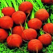Carrot Paris Market - Appx 6000 seeds
