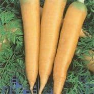 Carrot Solar Yellow - Appx 2700 Seeds