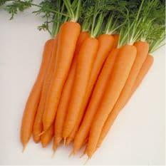 Carrot Sugarsnax 54 - Appx 250 seeds - Appx 500 seeds