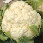 Cauliflower Aalsmeer - 25 seeds