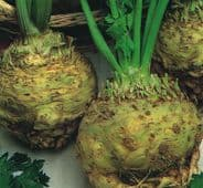 Celeriac Giant Prague - appx 2500 seeds