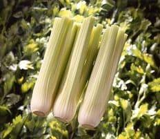 Celery F1 Victoria Appx 100 seeds