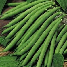 Climbing French Bean  Cobra Appx 30 Seeds