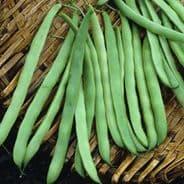 Climing Bean Kentucky Wonder 120 seeds