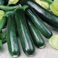 Courgette Black Beauty Seeds - 25 grams - Bulk Discounts available