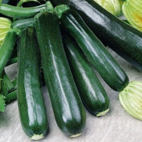 Courgette Black Beauty Seeds - 30 seeds