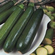 Courgette Green Bush Seeds 25 - 50 seeds
