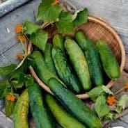 Cucumber Bedfordshire Prize Ridge - 50 Seeds / 100 seeds
