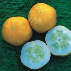 Cucumber Lemon Seeds - 50 seeds / 100 seeds