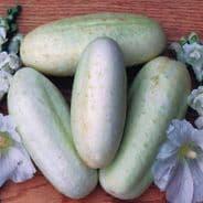 Cucumber White Wonder - 20 Seeds / 100 seeds