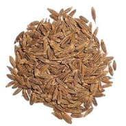 Cumin - Cuminum cyminum - Min 500 seeds