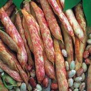 Dwarf French Bean Borlotto - Lingua Di Fuoco - 500 grams - Bulk Discounts Available