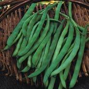 Dwarf French Bean Canadian Wonder 20 / 80 seeds