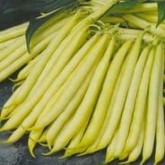 Dwarf French bean Orinoco - 100 seeds