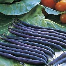 Dwarf French Bean Purple Queen - 90 seeds